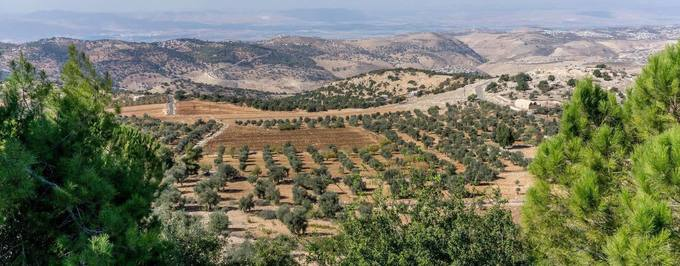 Study Finds Olives Grown at Higher Altitudes Yield Better Quality Oils