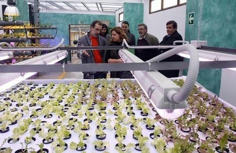 Ponen en marcha un vivero hidropónico en el que participan varias disciplinas -Galicia | Cultivos Hidropónicos | Scoop.it