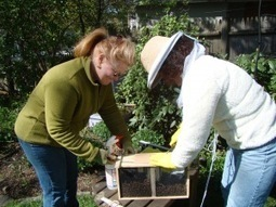 The Bees areHere! Starting beekeeping | 100 Acre Wood | Scoop.it