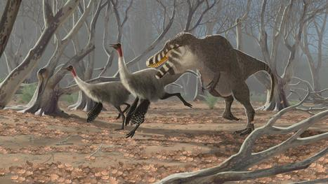 Feathers for Tyrannosaurs | Paleontology News | Scoop.it