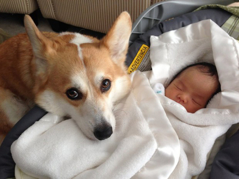 They Weren't Sure What To Expect. But In An Instant, Wilbur And The Baby Became Best Friends.   History and evolution of compassion   Scoop.it