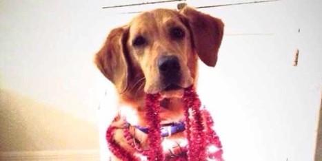 Elle fait poser son chien malade pendant sa convalescence | CaniCatNews-actualité | Scoop.it