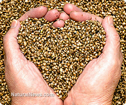 New hemp oil could be a powerful cooking alternative | Plant Based Nutrition | Scoop.it