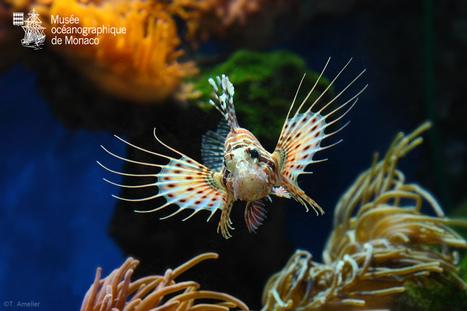 Le Musée à l'heure d'été ! - Des activités pour tous - Animations - Aquariums - Collections - Expositions - Jeux et détente ! | Information sur les océans | Scoop.it