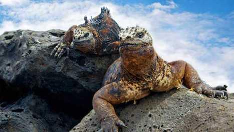 Las islas Galápagos, un tesoro ecológico que tiene 1,6 millones de años - RTVE.es | Actualidad forestal cerca de ti | Scoop.it