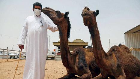 Flawed Saudi Response Fueled Outbreak of MERS | Virology News | Scoop.it