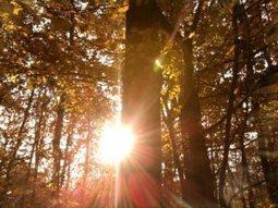 Magic moment #1:Morning. | #blogmust | Scoop.it