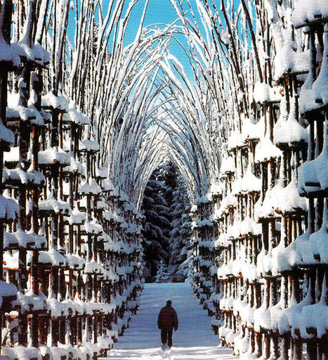 Vegetal Cathedral in Italy | The Blog's Revue by OlivierSC | Scoop.it