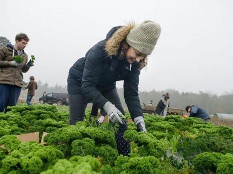 Volunteers salvage the crops supermarkets refuse | Organic Farming | Scoop.it