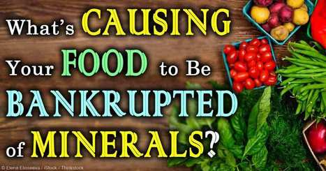 How to Bring Minerals Back Into the Soil and Food Supply | Monsanto vs Mother Earth | Scoop.it