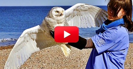 See the Incredible Rescue & Release of One of North America's Largest Owls! | Poetry for inspiration | Scoop.it