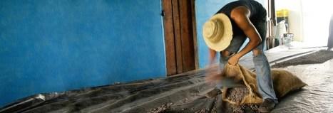 Glosario: 55 términos de cacao y chocolate para conocer | cacao | Scoop.it