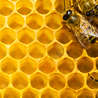 Bees and beekeeping