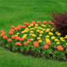 Fertilization and Weed Control Service
