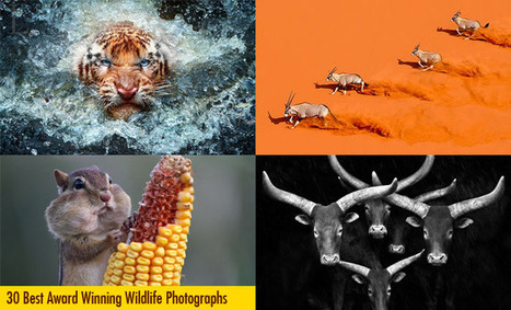30 Best Award Winning Wildlife Photography examples around the world | Hitchhiker | Scoop.it