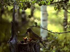 Gardens Inspired: Attract bug-eating birds to your garden | 100 Acre Wood | Scoop.it