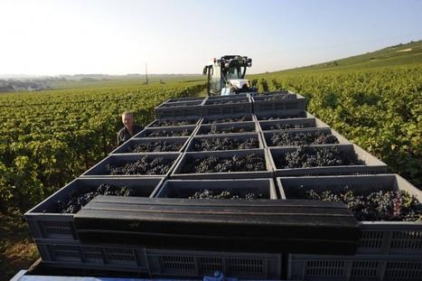 Le pinot noir à la conquête du monde | Le Vin et + encore | Scoop.it