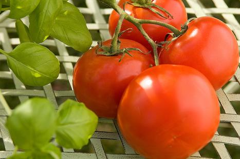 The mad science behind vegetable grafting | Vegetable Gardening Resources | Scoop.it