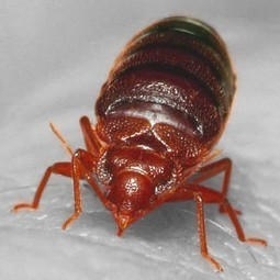 Horrifying study shows how far bed bugs can spread in apartment buildings. - Seriously, Science?   It All Begins in Your Mind   Scoop.it