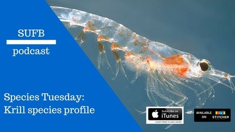 SUFB 113: Krill Species Profile | Amocean OceanScoops | Scoop.it