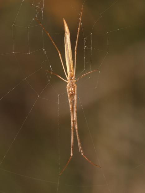 spiderbytes | Spiders | Scoop.it