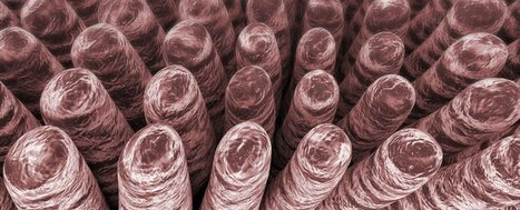 New Batteries That Mimic the Human Intestine Could Store 5 Times More Energy | Biomimicry | Scoop.it