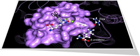 Impact of Substrate Protonation and Tautomerization States on Interactions with the Active Site of Arginase I - Journal of Chemical Information and Modeling (ACS Publications)   Bioinformatics, Chemoinformatics, Biocomputing and Systems Biology   Scoop.it