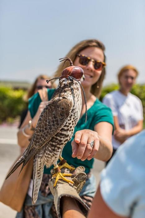 Meet the Falcon-Whisperer of Napa Valley Wine Country | Food for Pets | Scoop.it