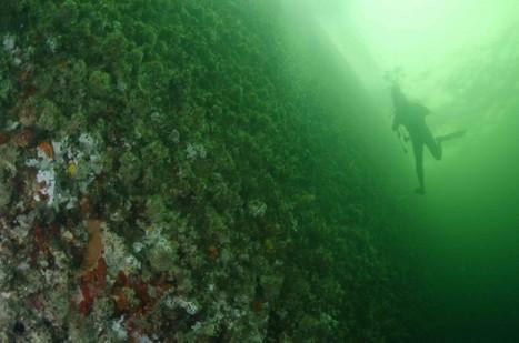 Gabon Expedition: The dive under a supertanker | Scuba Diving Adventures | Scoop.it