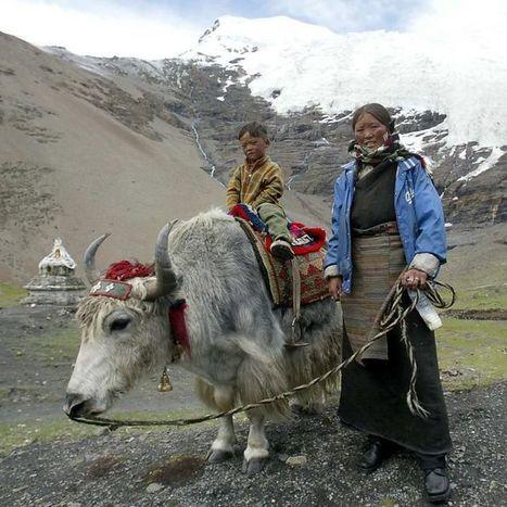 Gene from extinct human 'fortifies high-altitude Tibetans' | Humans Being | Scoop.it