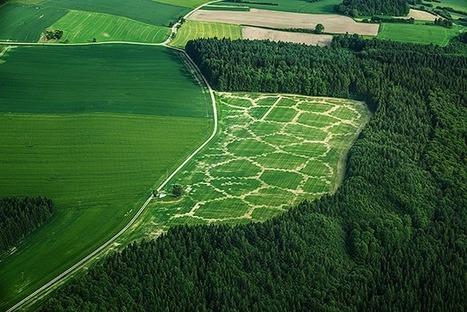 Avena+ Test Bed — Agricultural Printing and Altered Landscapes | InRural | Scoop.it