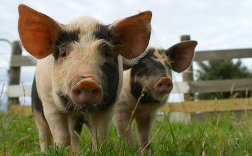 10 Amazing Facts About Animal Sentience   This Gives Me Hope   Scoop.it