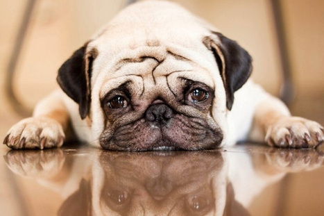 Top 7 Dog Breeds for People Fighting Depression | Animals R Us | Scoop.it