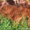 Henné - coloration cheveux