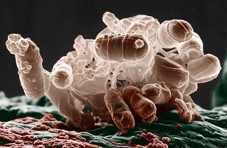 Breakthrough DNA Editor Born of Bacteria |  Quanta Magazine | Brain Candy | Scoop.it