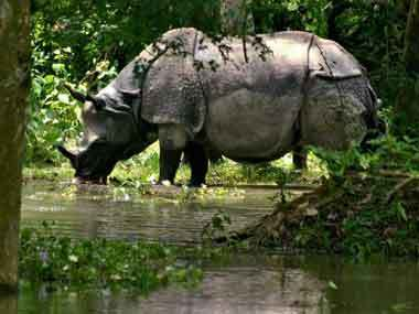 Poachers kill rhino, calf in Assam taking toll to 41 - Firstpost | Help save our Rhinos | Scoop.it