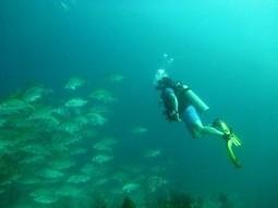 Best Locations to Enjoy Scuba Diving | Scuba Diving Adventures | Scoop.it