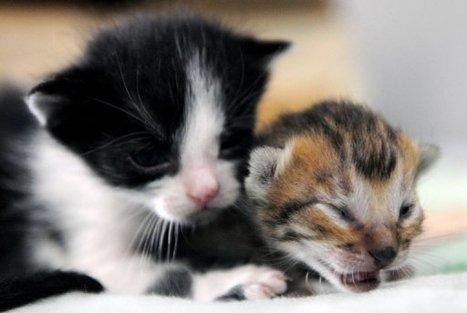 Un chaton survit à un voyage de deux semaines dans un container, sans manger | Les chats c'est pas que des connards | Scoop.it