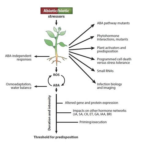 ABIOTIC PLANT DISEASES EPUB