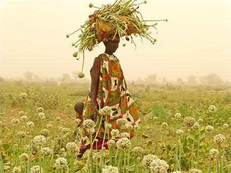 Pour sauver notre futur : foin des pesticides ! - Télévision - Télérama.fr | pesticides : un vrai cancer social ? | Scoop.it