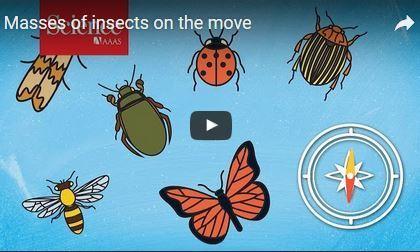 Des milliers de milliards d'insectes migrent par les airs chaque année | De Natura Rerum | Scoop.it