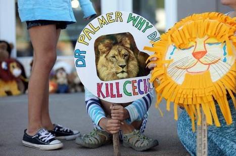 Zimbabwe calls for extradition of Cecil the lion's killer | Upsetment | Scoop.it