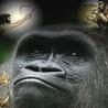 Antropologia (teorias de evolucion)