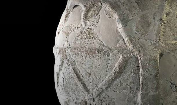 Archaeologists Discover Ancient Olive Oil in Italy