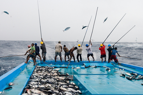 Sustainable tuna fishing is bad for climate – here's why | All about water, the oceans, environmental issues | Scoop.it