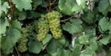 Ouverture d'un Master spécialisé en vin pétillant au Royaume-Uni   Le vin et ses innovations   Scoop.it