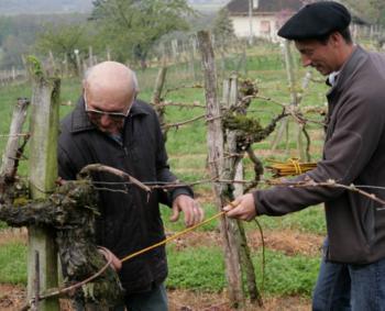 Une vigne de Saint-Mont monument historique | BenWino | Scoop.it
