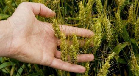 La gestion des risques   Alim'agri   Alimentation Santé Environnement   Scoop.it