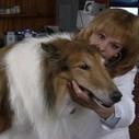 Pet Treat Recalls Expand   Dr. Carols Naturally Healthy Pets Blog   Pet News   Scoop.it