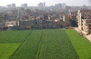 Feeding the world's cities: a critical challenge for sustainable development | Food Security | Scoop.it